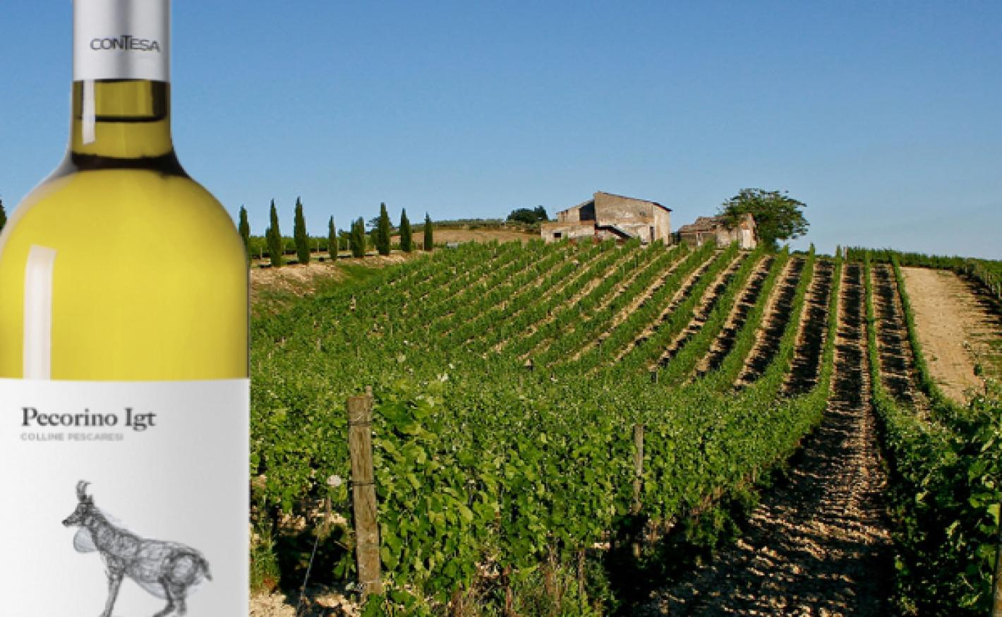 Contesa - New Arrivals from Abruzzo