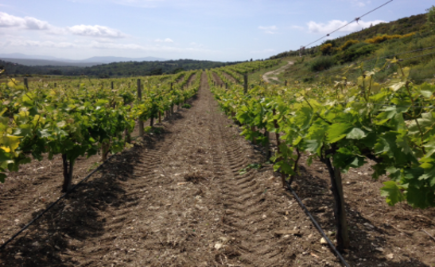 Natural Wines and the Fourth Estate: A Rant