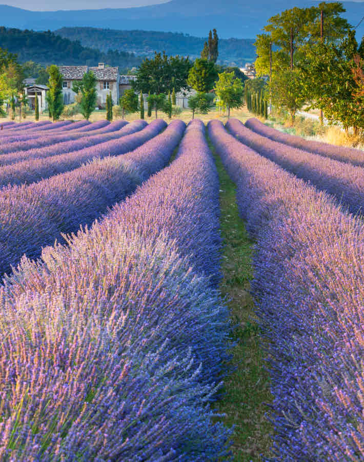 Provence Wines